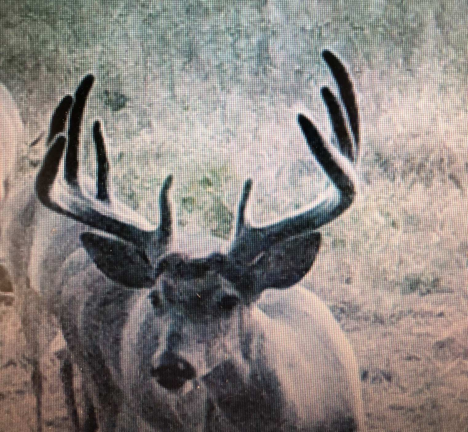 Kansas Whitetail 16
