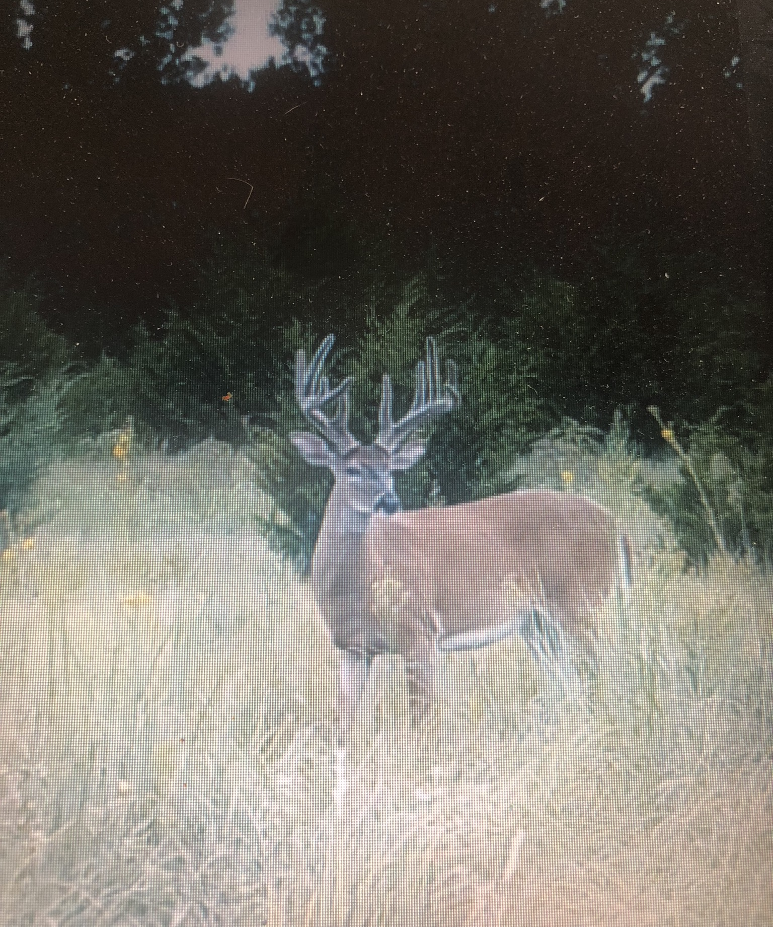 Kansas Whitetail 21