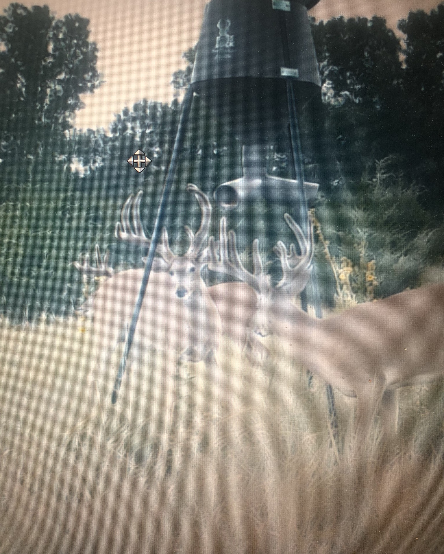 Kansas Whitetail 3