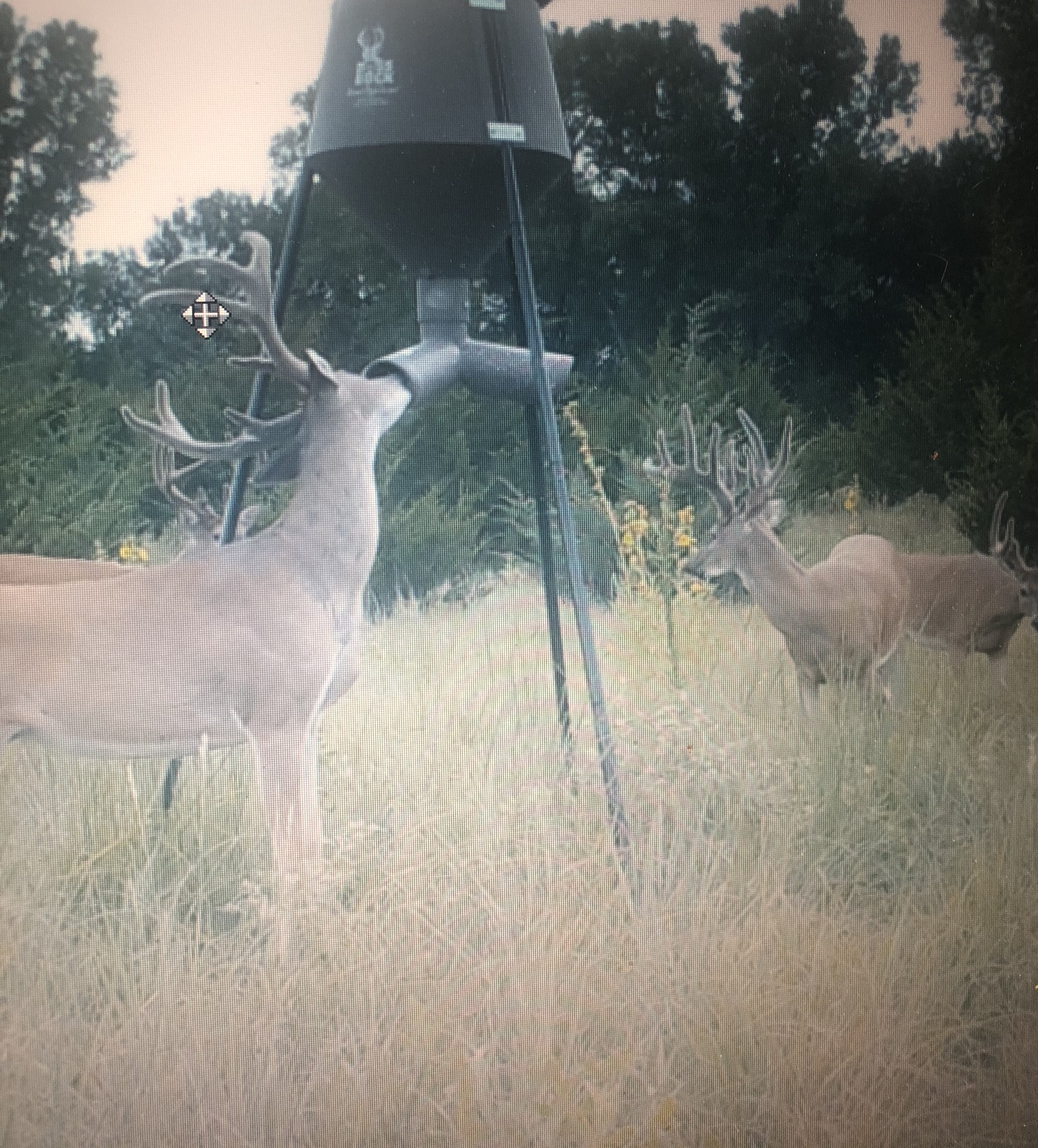 Kansas Whitetail 5