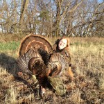 Kansas Turkey