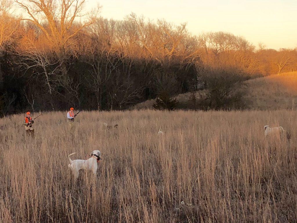 Kansas Quail,Kansas Hunting, Quail Hunting,